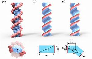 Helical Continuum Model   A  The Atomic Structure Of The B