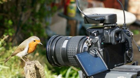 wildlife photography  buy  expensive cameras
