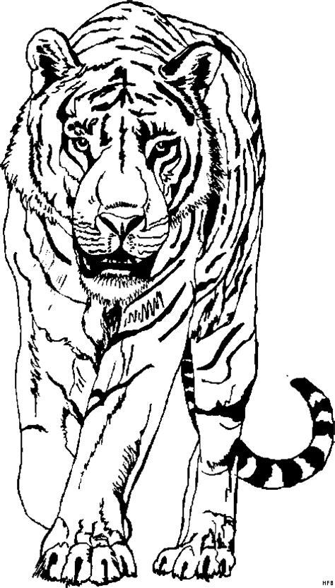 tiger von vorne  ausmalbild malvorlage tiere