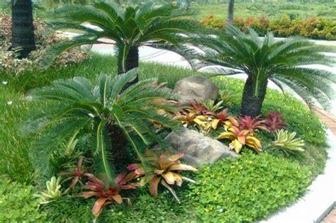 tips jitu merawat sikas tanaman jurasik jitunewscom