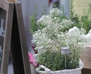 Grünpflanzen Für Innen : schnittblumen blumenstrau topfpflanzen blumenwerkstatt ~ Eleganceandgraceweddings.com Haus und Dekorationen