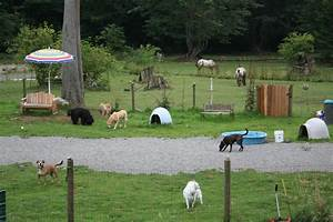 mystic mountain pet retreat loving dog boarding cat With dog boarding in your home