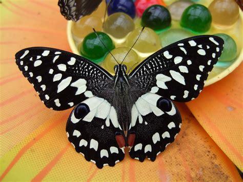 bambini alla casa delle farfalle  alberghi