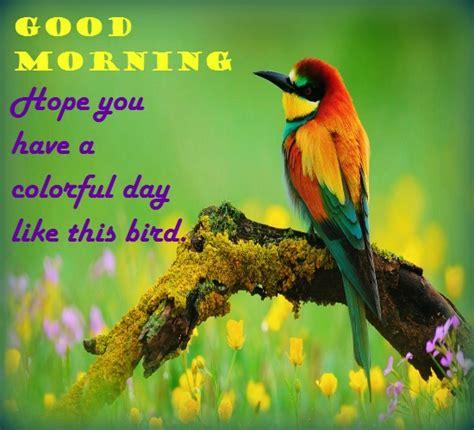 wishing   colorful morning  good morning ecards
