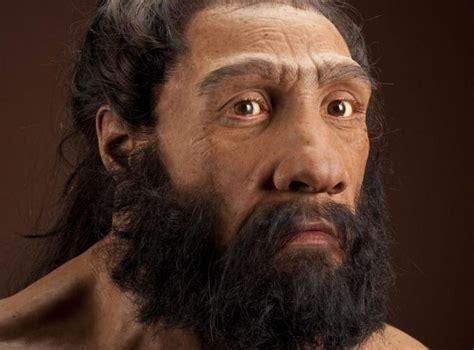 cerebro de neandertales  posible factor de su extincion