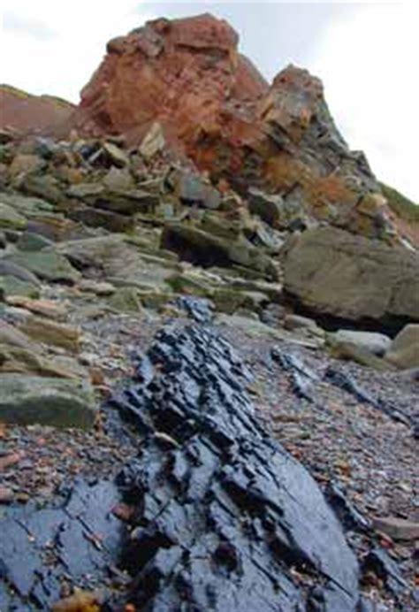 historical research 183 joggins fossil cliffs nova scotia