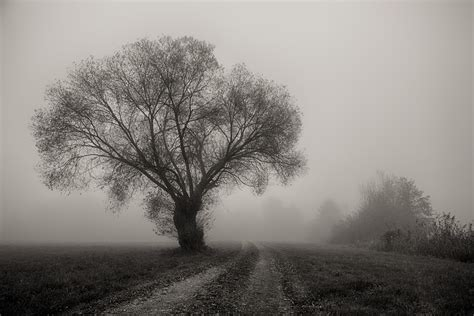 tree fog landscape  photo  pixabay