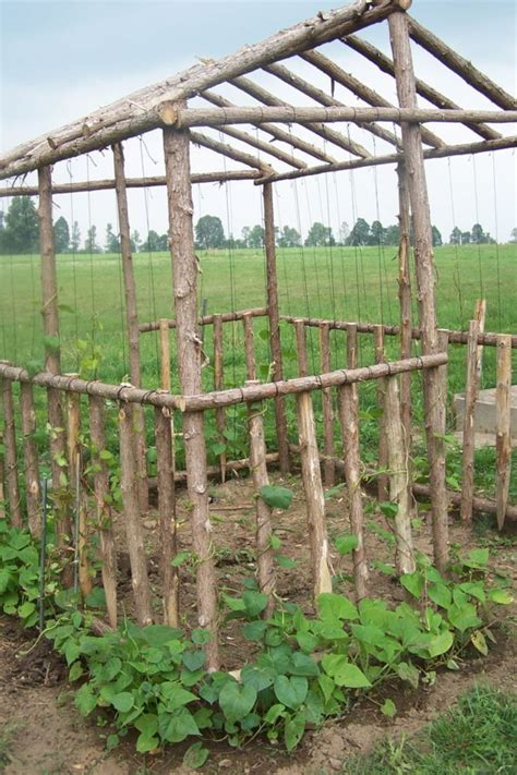 Simple Diy Green Bean Trellis Inspiration (27) Wartakunet