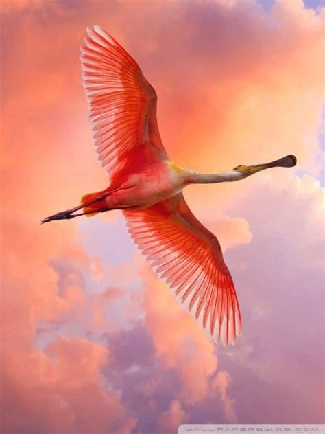 pink bird flying  hd desktop wallpaper   ultra hd