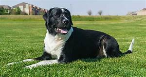 Mixed Breed Dogs - Is It Wrong To Create Hybrid Dog Breeds