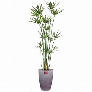 Plantes à Suspendre : papyrus 180cm plante artificielle ext rieur achat ~ Premium-room.com Idées de Décoration