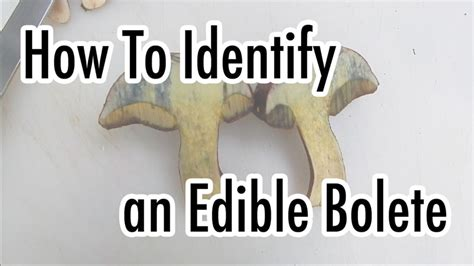 How To Identify An Edible Bolete Mushroom  The Survival Gardener