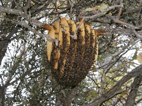 A Majestically Beautiful Bee Hive That Could