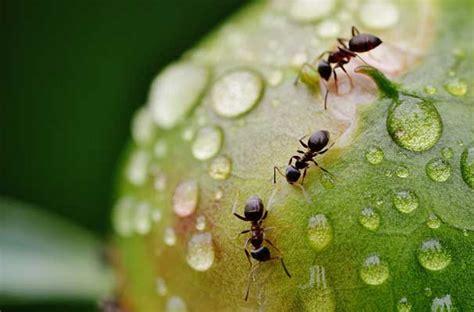 Ameisen Im Rasen Vertreiben  Retten Sie Ihren Rasen Vor