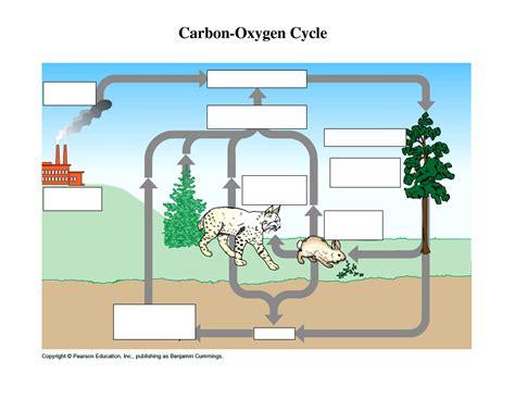 Worksheet Carbon Cycle Diagram Worksheet Grass Fedjp