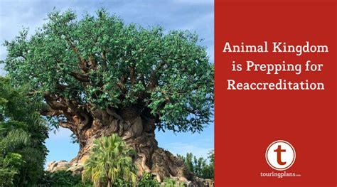 disneys animal kingdom preparing reaccreditation touringplans