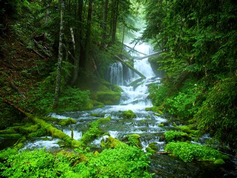 green forest wallpaper description from forest green nature water waterfall Beautiful