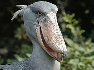 bird beak | STRANGE SHORE BIRD - BIG BEAK | This Says It ...