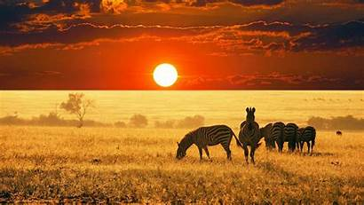 4k Africa Wallpapers Ultra Nice Wallpaperaccess Backgrounds
