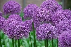 Welche Blumen Blühen Im August : welche fr hlingsblumen bl hen wann ~ Orissabook.com Haus und Dekorationen