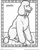 Poodle Coloring Pages Dog Printable Worksheet Worksheets Breeds Poodles Education Animal Grade Standard Breed Desert Adult Pattern Animals Colouring Cat sketch template