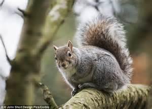 electrified squirrel knocks  power   silicon