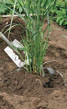 tipps für schneller wachsende haare die besten 25 schnell wachsende pflanzen ideen auf osterbasteln tontopf schnell