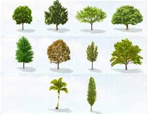 tree vector 500 free editable illustrations to