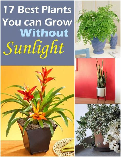 Plants that Grow without Sunlight | Growing plants indoors