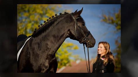 andalusian horse stallion breeders semen frozen