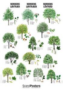 deciduous tree poster beautiful poster with trees