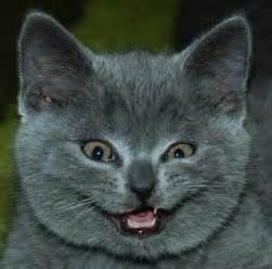 cat faces funniest cat faces and animals