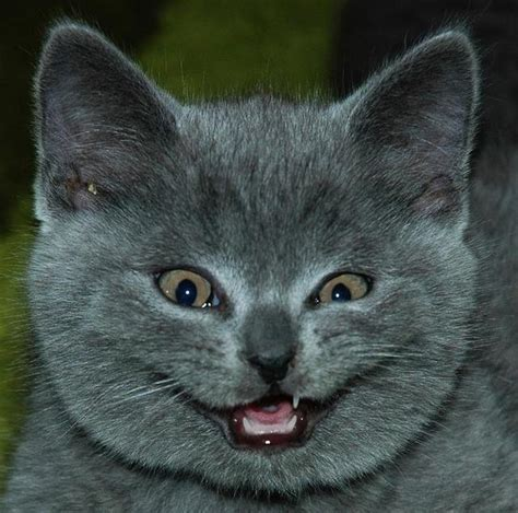 HD Animals: funny cat face