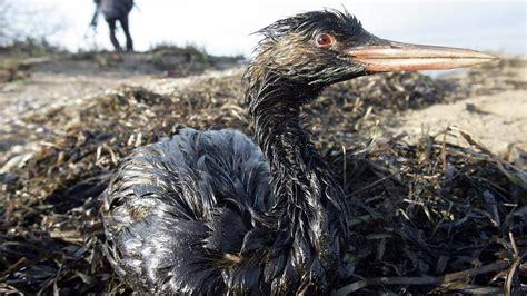 atlantik verschmutzung atlantik meer natur planet