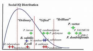 File:Social-IQ distribution.png - Wikipedia
