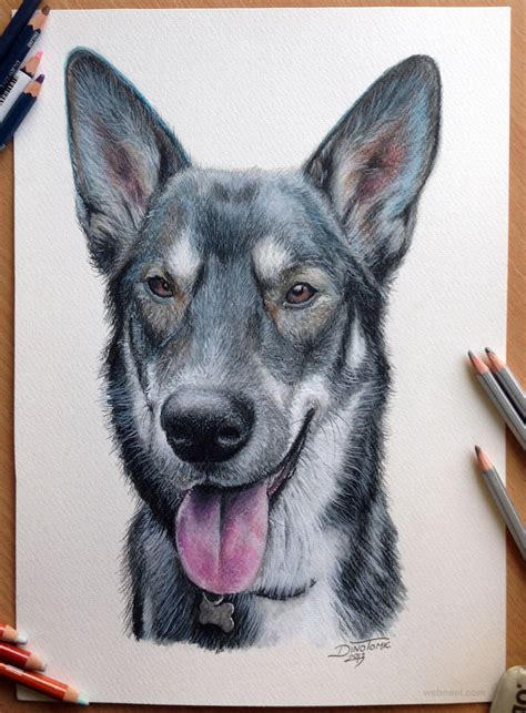 beautiful dog drawings  art works  top artists