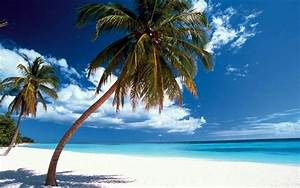 Bilder Am Strand : fotos palmen strand ~ Watch28wear.com Haus und Dekorationen