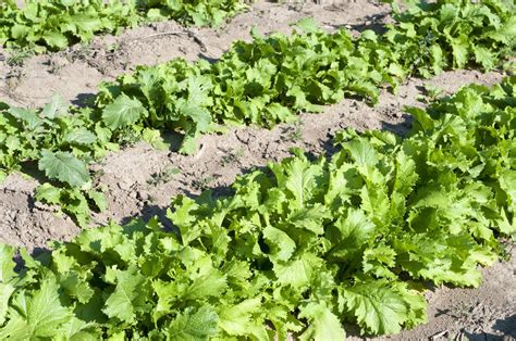 Types Of Drought Tolerant Vegetables  Tips On Growing Low
