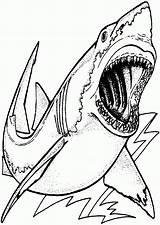 Coloring Shark Printable Sharks Megalodon Drawing Colorear Colouring Template Wonderful Dinosaurios Sheets Saw Children Albanysinsanity Ocean Draw Libro Coloriage Dibujos sketch template