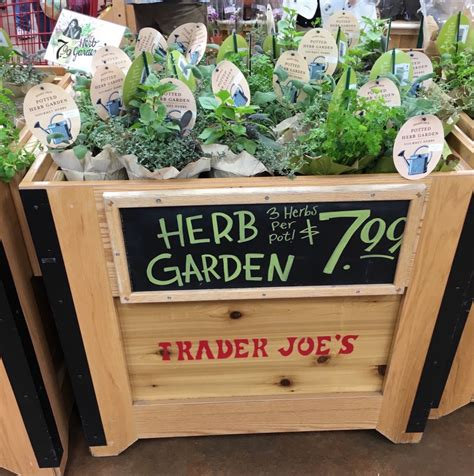 trader joe s palm gardens 11 reasons why harrisonburg needs a trader joe s asap