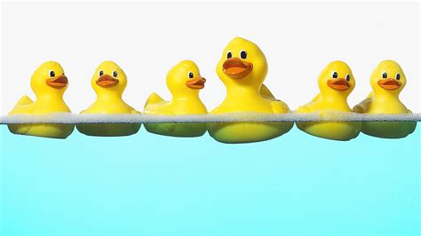 Animated Duck Wallpaper - rubber ducks wallpaper 1920x1080 hd
