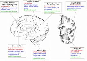 A Schematic Diagram Depicting Different Brain Regions And