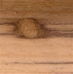 Mittel Gegen Wespen Im Dach : wespennest entfernen spray neudorff permanent wespen turbo spray mittel gegen wespen ~ Eleganceandgraceweddings.com Haus und Dekorationen