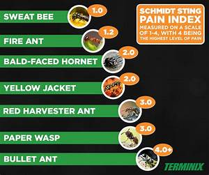 Insect Pain Scale | Schmidt Sting Pain Index | Terminix