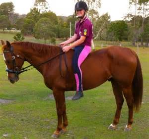 Reg QH Gelding - Quarter horse - Horsezone