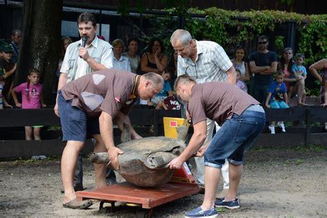 Uz piecpadsmitgades svinībām pulcējas bruņurupuču ...