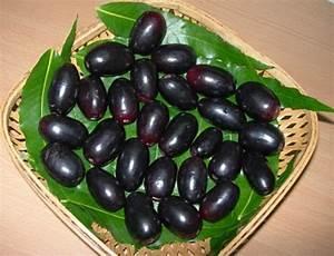 Jamun Fruit (Naaval Pazham) - Kamala's Corner
