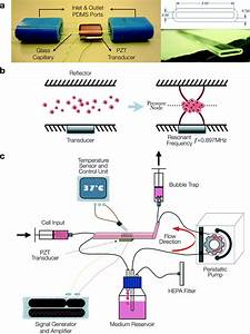 Application Of An Acoustofluidic Perfusion Bioreactor For