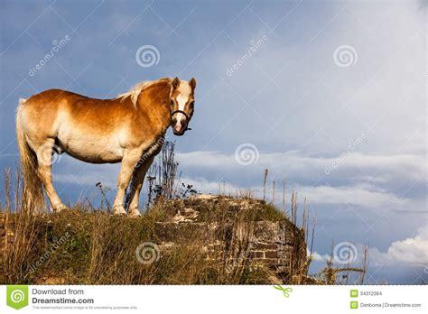 horse ungulates domesticated ungulate species equidae current ten order animals flora head preview