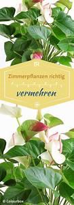 Zimmerpflanzen Für Kinderzimmer : pflanzen zimmerpflanzen vermehren begonien farn co garten pinterest zimmerpflanzen ~ Orissabook.com Haus und Dekorationen